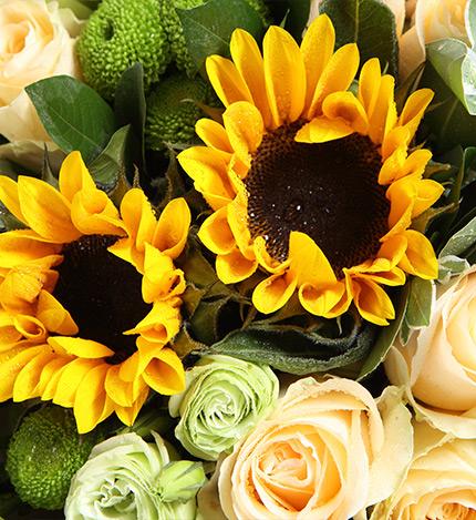 香檳玫瑰11枝,綠色桔梗10枝,向日葵2枝,混合花束