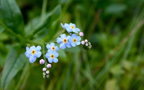 送什么花給閨蜜合適 有關友情的花