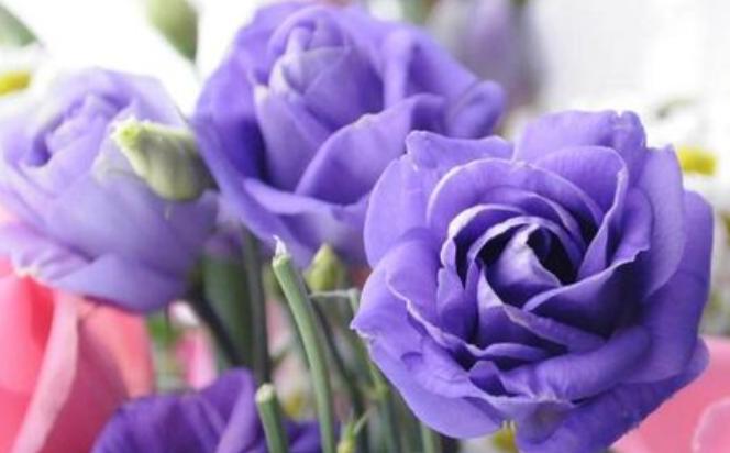 朋友送花應送什么花    挑哪種花才合適