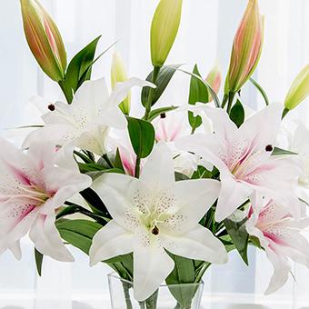 男孩生日女孩送什么花 適合送男孩慶生的花