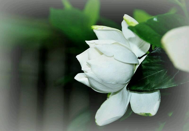 結婚后適合送什么花 結婚送這幾種花就夠了
