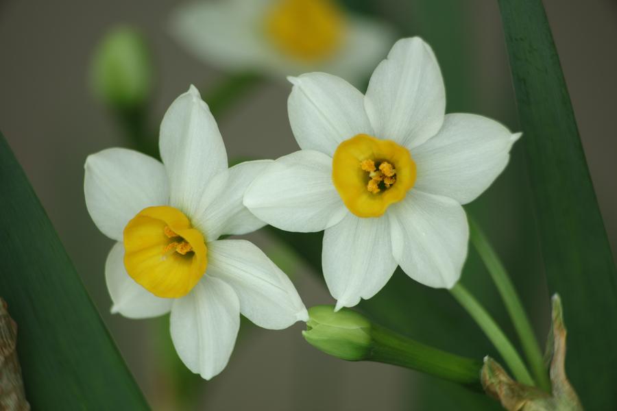 七夕节送什么花有意义 七夕送哪些花给女友