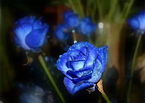 暗戀一個人應該送什么花 都有特殊的含義