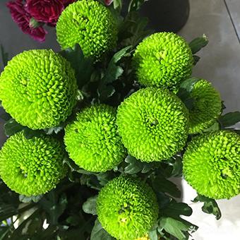給情侶送花選什么好 適合送情人的花