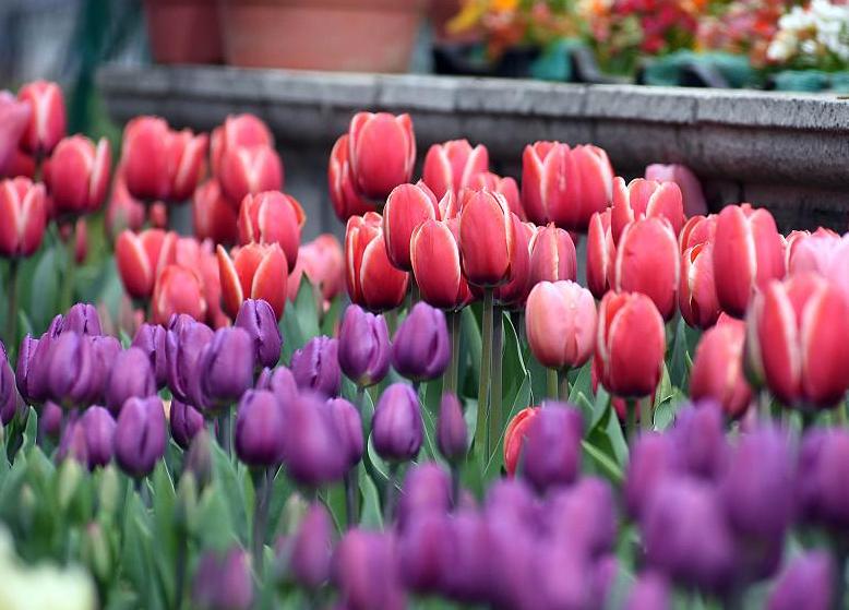 開業花籃鮮花有哪些    花籃一般是用什么花