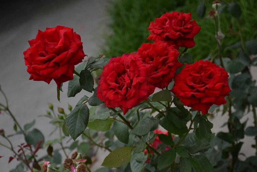 開業送什么鮮花比較好 開業一般送哪些花