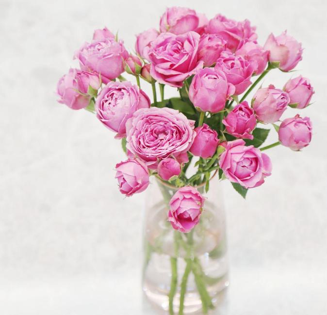 妹妹過生日送花好嗎   妹妹生日該怎么選花