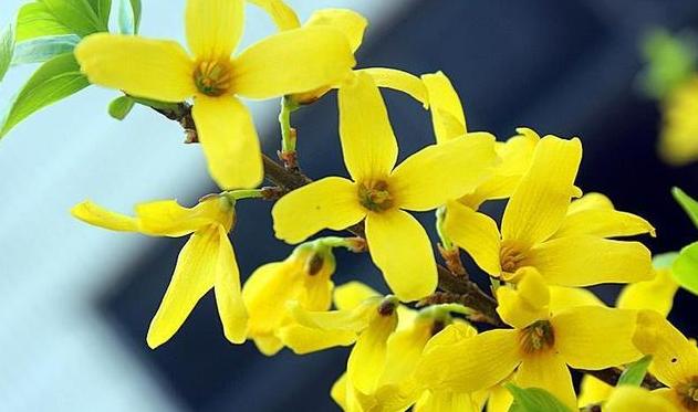 向日葵花束卡片寄語    送向日葵寫什么祝福語
