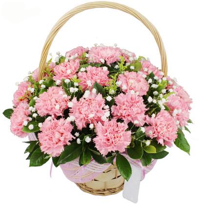 表示親情的花有哪些 表示親情的花有什么