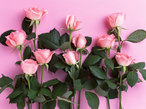 玫瑰花可以隨便送嗎 33朵玫瑰代表什么意思