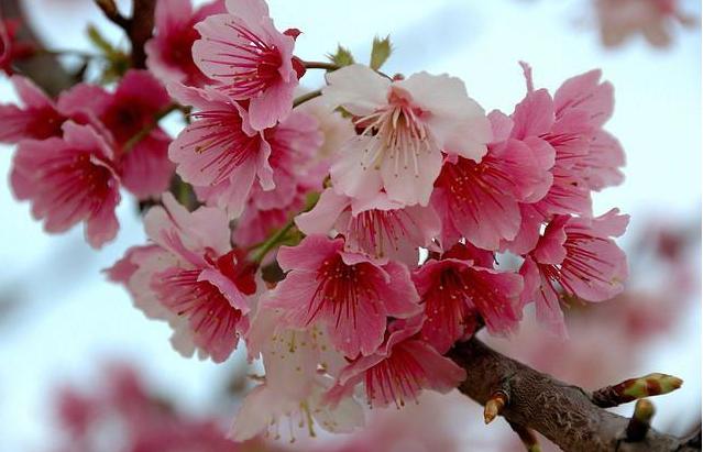 象征自由不被約束的花   代表自由的花