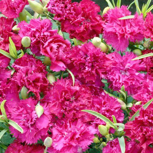 哪個網可以訂鮮花 網上鮮花預定