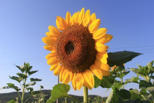 勞動節適合送什么花 送花的意義