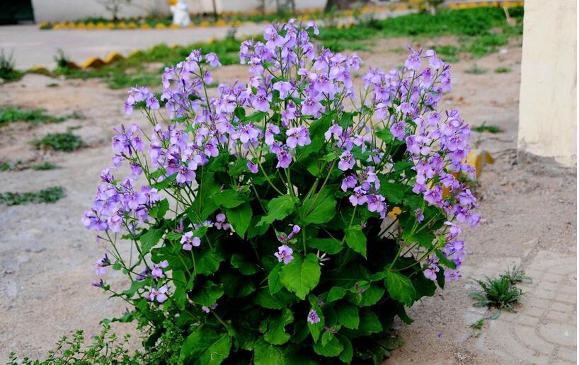 花語是代表戀愛的花的名字 送哪些花表示戀愛