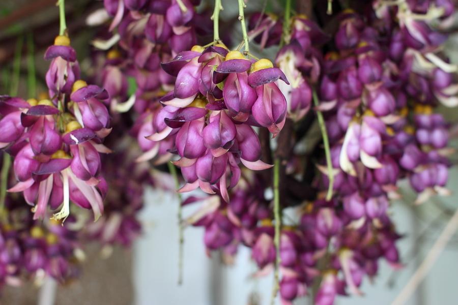 什么花象征美好 花语是美好的花有哪些