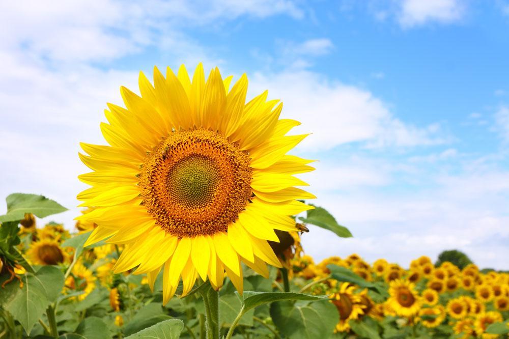 代表幸福快樂的花 送什么花的寓意象征幸福
