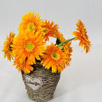 爸爸生日送什么花好 適合送父親的花