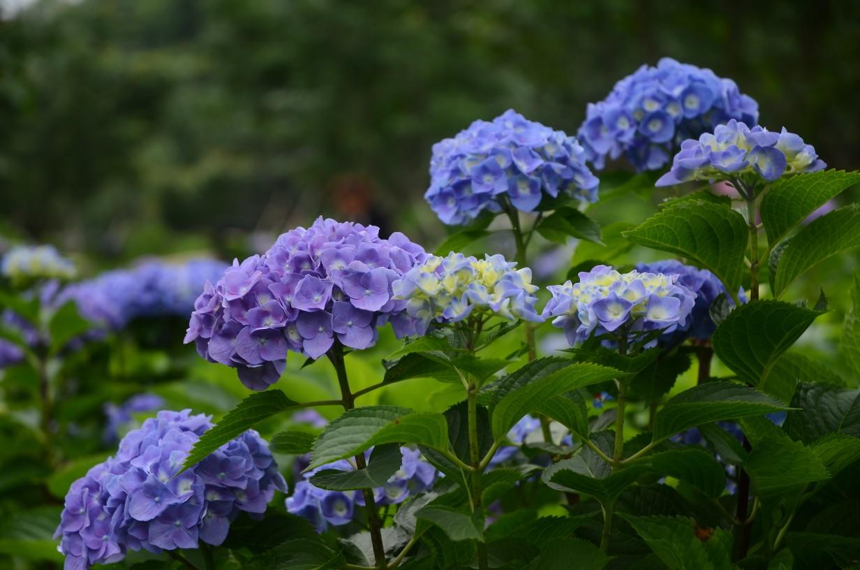 中秋节送花好吗 和中秋节有关的花有哪些
