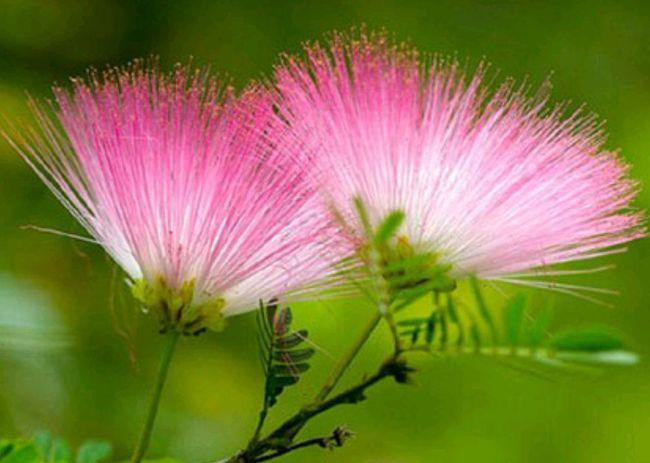 送爱人的花有哪些 爱人之间送什么花