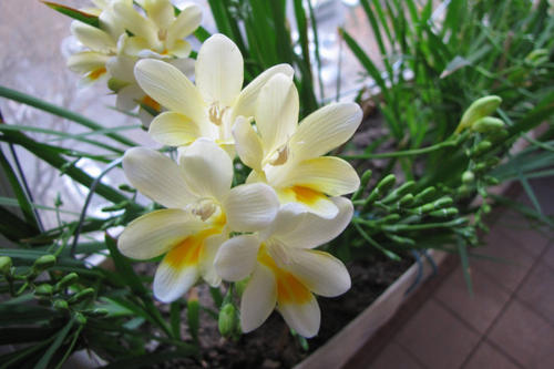 春節送花有講究嗎 春節贈花宜贈送什么花