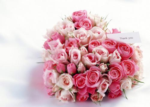 什么花能代表我對戀人的愛  可以送幾朵