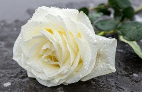 祭奠逝者送什么鮮花好   一般用到這兩種菊花