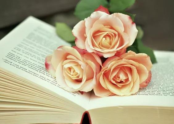 母親節送15朵康乃馨的意義    康乃馨15枝代表什么