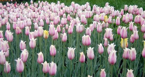 哪些鮮花象征堅持 什么花代表堅持
