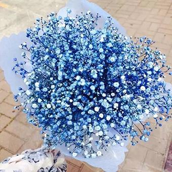 七夕該送女友什么花 七夕送的花有哪些