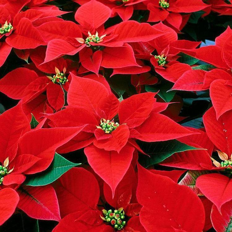 感恩節禮物送什么禮物 送給老師最實用的禮物