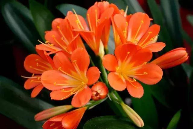 给领导送花好不好 给领导送花有什么寓意