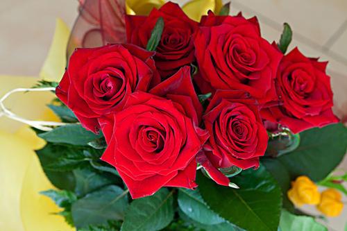 代表國慶節的花 國慶節送女友什么花