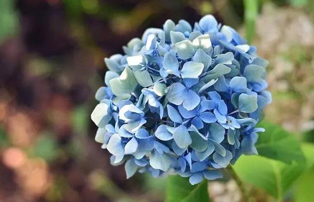 媽媽生日送花大全   生日鮮花表達對媽媽的愛