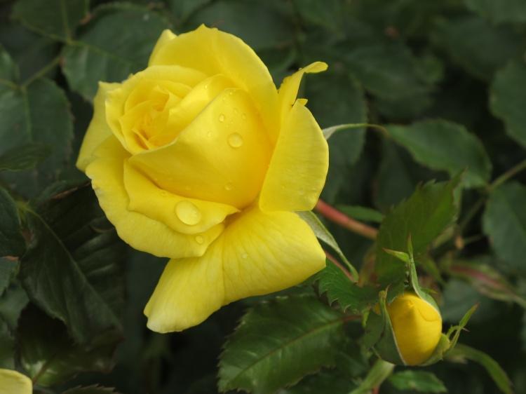 戀人分手送什么花 送花的寓意