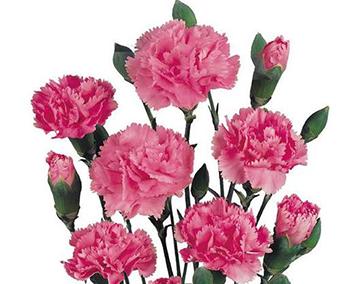 教師節給教育機構送什么花 教師節送的花有哪些