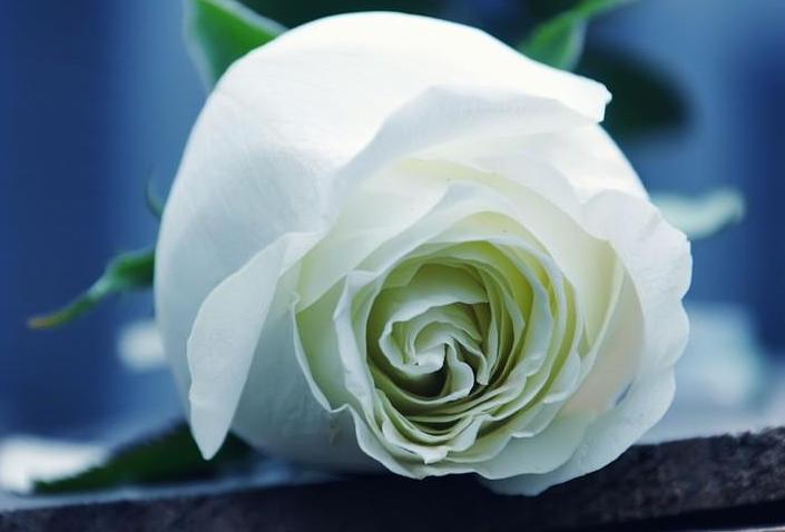 送好朋友花送什么花好    送哪些花给朋友带去惊喜