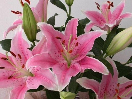 網上買鮮花靠譜嗎 買鮮花去哪個網站