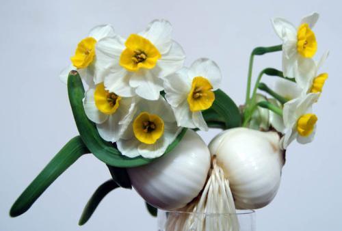 什么花代表幸運 能帶來吉祥的都有哪些花