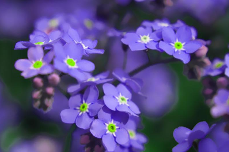 花語是向往自由的花    代表自由的花有哪幾種