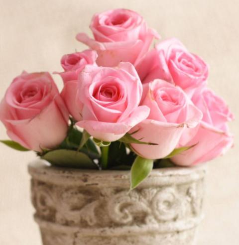 網上訂花送長輩,鮮花的花語都是什么意思?