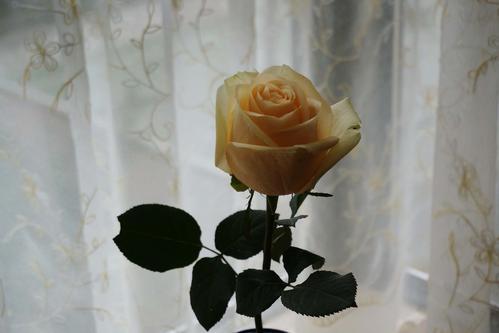 暗戀一個女人送什么花 送花的意義