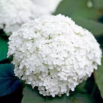 哈爾濱尚志市花店鮮花速遞 尚志市送花上門