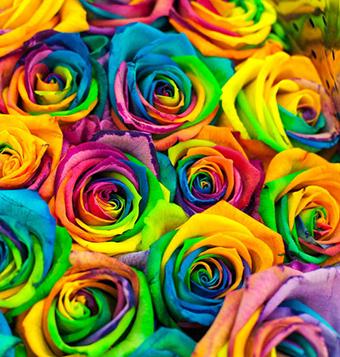 給女朋友送花卡片選什么好 適合送女友的花