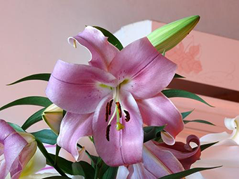 端午节可以送什么花给家人 送家人的花怎么选