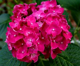 呼倫貝爾牙克石市花店訂花 牙克石同城鮮花訂送