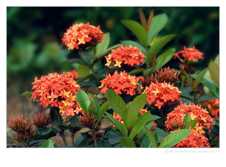 中秋节可以送什么花 八月十五中秋节送哪些花